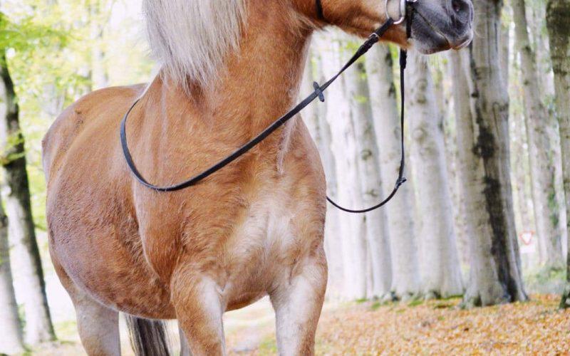 Paard Zorgboerderij